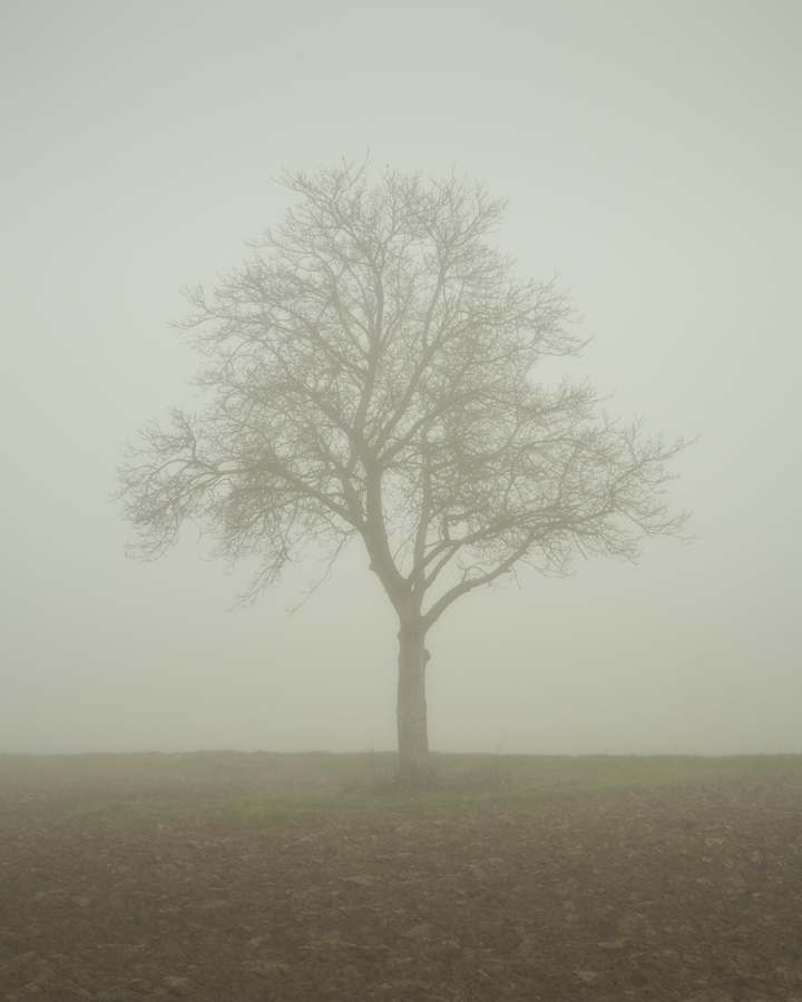 santiago perez isolation tree