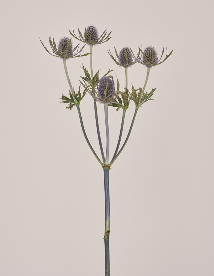 santiago perez beauty norms flower